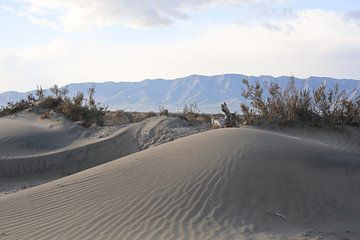 duinen van marijke servaes