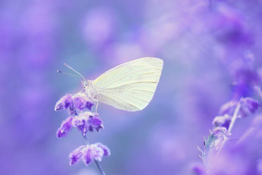 Butterfly dreams..