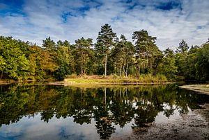 Reflectie bomen in het water van