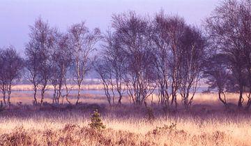 Strabrechtse Heide 179 sur Desh amer