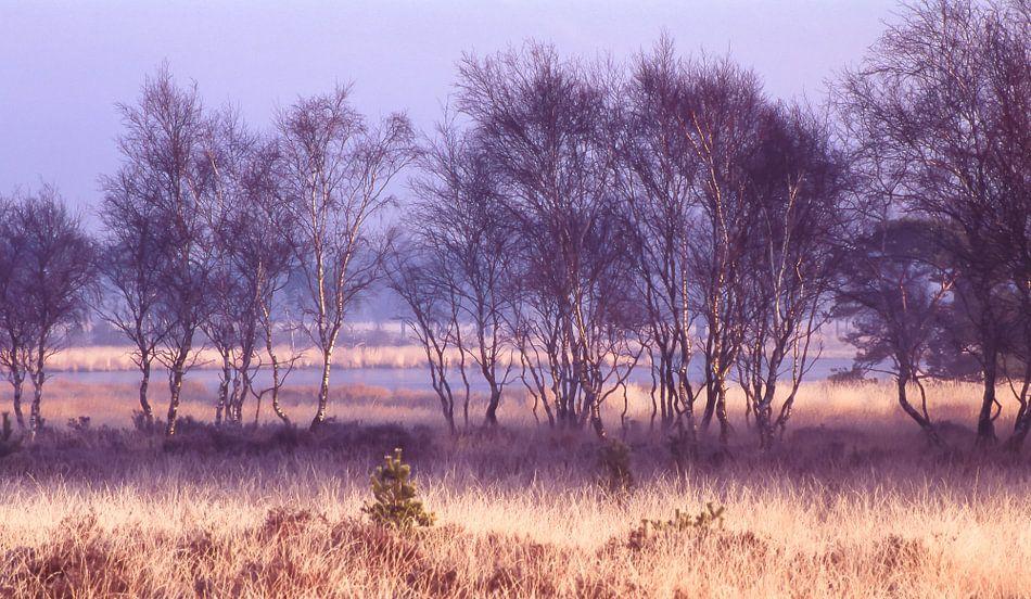 Strabrechtse Heide 179