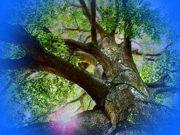 Baum van Helmut Englisch