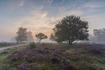 Brouillard au lever du soleil sur le Westerheide 1