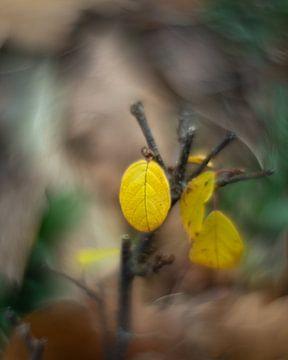 Els von Paul Glastra Photography