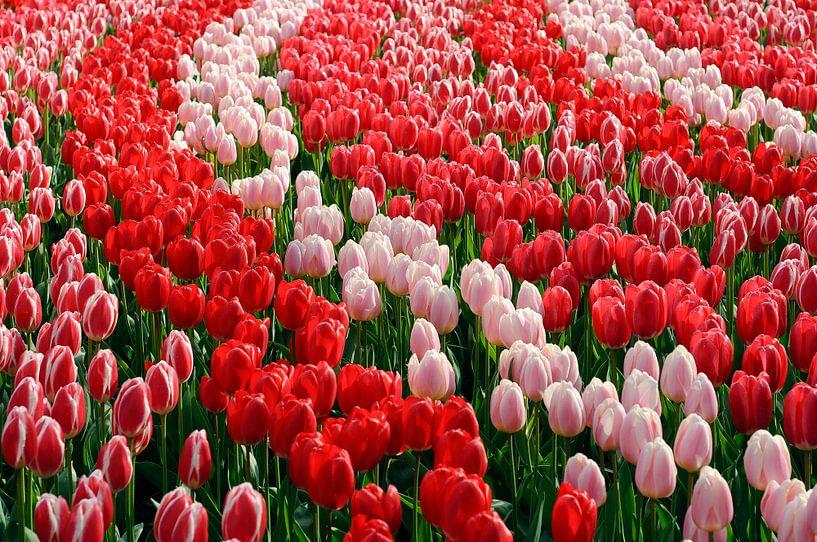 Sea of flowers van Corina de Kiviet