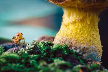 Pilz mit Tier von Tijmen Hobbel