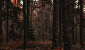 Autumn Dreams (3/4)