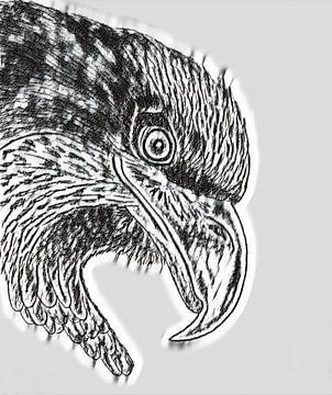 Adler von Jose Lok