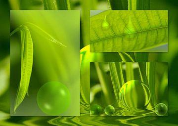 All in green van Vera Laake