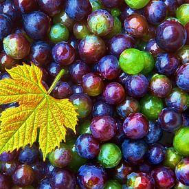 Grappa (Blauwe Druiven) van Caroline Lichthart