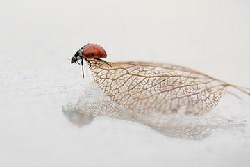 Lieveheersbeestje op oud blad van Mds foto