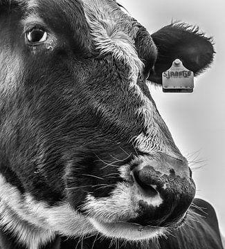 Sjaantje 11 Black&White