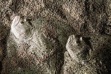 Camouflage vissen van Steve Van Hoyweghen