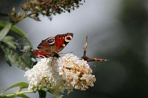 Vlinders van Ilona Beekman