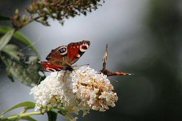 Vlinders von Ilona Beekman