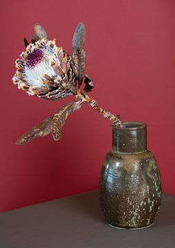Protea in bruine vaas van Floris Kok