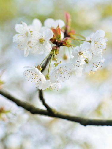 Spring-feelings