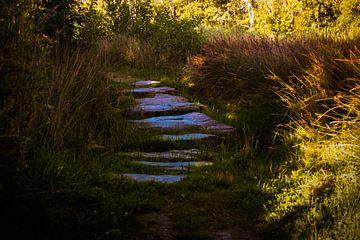 het pad naar.............. von sandra ten wolde