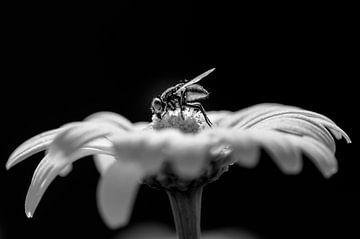 Vlieg op een bloem van