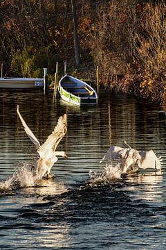 Swan Lake - Start up van Christine Nöhmeier