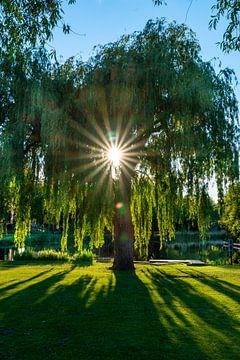 Boom met zonlicht doorheen van Trinity Fotografie
