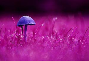 Eenzame paddenstoel paars/blauw van