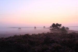 Heidelandschaft (Veluwe) von Frans Roos