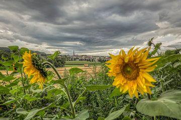 Dorpje Vaals met zonnebloemen van