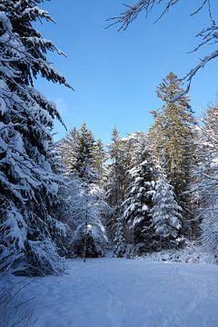 Winterbos met besneeuwde bomen in winterzon onder blauwe hemel van creativcontent