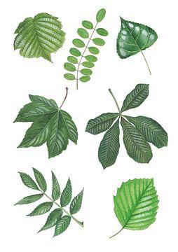 Bladeren loofbomen van Jasper de Ruiter