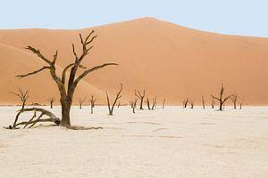 Deadvlei Namibia van