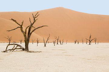Deadvlei Namibia van Katrin Engl