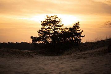 zon gaat onder op de zandverstuiving van Kim van Beveren