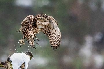 Peppie in de sneeuw sur