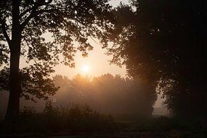 Here comes the sun von XPOOZ your identity