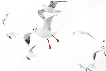 Gulls von Judith Borremans