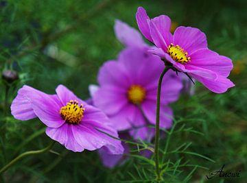 Blumen Makro von Iwona Sdunek alias ANOWI