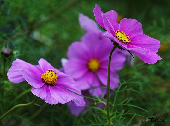 Blumen Makro van Iwona Sdunek alias ANOWI
