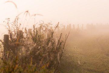 zaun im Nebel von Tania Perneel