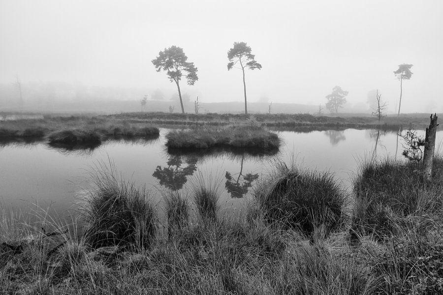Vennen landschap monochroom van Elroy Spelbos
