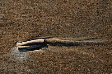 Schelp op het strand van Marc Smits