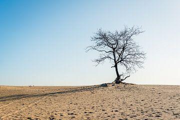 Nackter Baum auf einer sandigen Ebene von Ruud Morijn