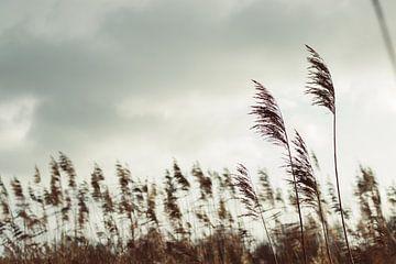 Pluimen in de wind van Veri Gutte
