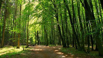 Waldpanorama van Ostsee Bilder