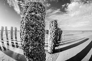 Palenrij op het strand van Westkapelle in zwartwit