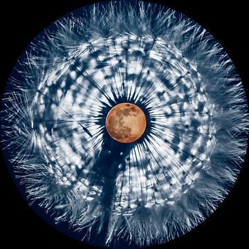 Volle maan in paardenbloem van Stephan Zaun