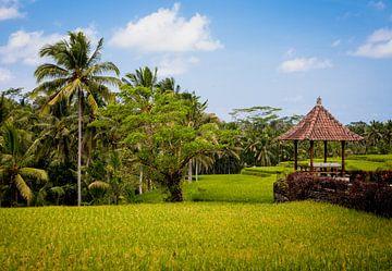 Rijstvelden op Bali  von Pieter Wolthoorn