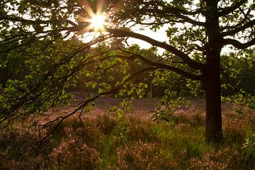 Zonsondergang aan de Bergse Heide van Sabina Meerman