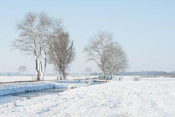 Arbres dans un paysage de polders enneigés sur Beeldbank Alblasserwaard