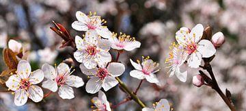 Fleur de printemps sur Corinne Welp